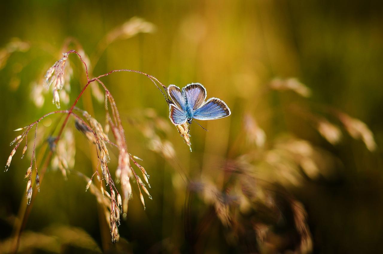 butterfly-1938978_1280
